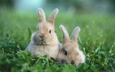aquaring allevamento conigli
